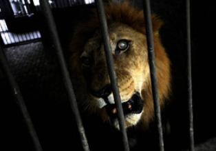 В Северодонецке в брошенном зоопарке умирают животные