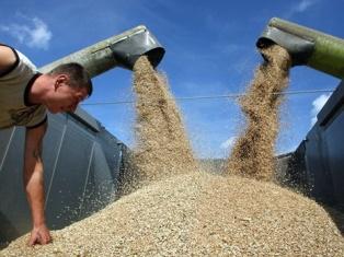 Экспорт зерновых из Украины составит 15-18 млн. т.