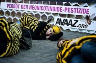 Экологи обвиняют химические концерны Bayer и Syngenta в уничтожении пчел