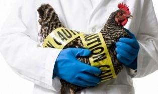 В РФ выявлен первый в мире случай инфицирования человека птичьим гриппом H5N8