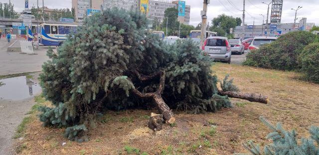В Днепре уничтожают зеленые насаждения для расширения парковок
