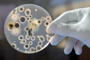 В США зафиксировали вспышку устойчивого к лечению смертельного грибка Candida auris