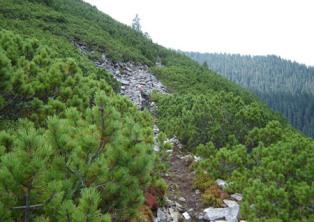 В Украине запретили вырубку леса на экспорт
