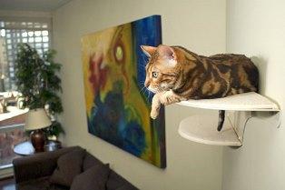 Как защитить кошку от опасных ситуаций в квартире?