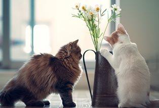 Две кошки, один дом: как содержать питомцев?