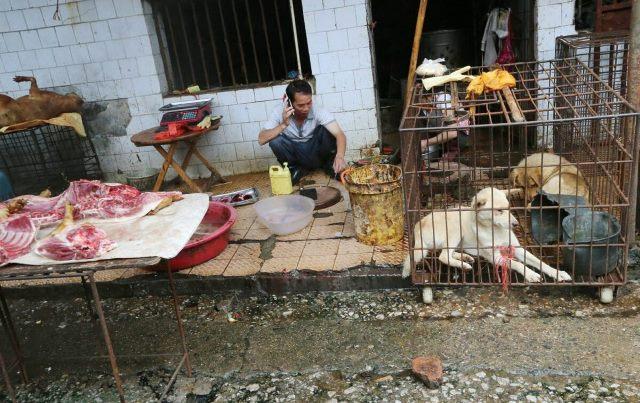 Уроки коронавируса: китайцы продолжают поедать летучих мышей