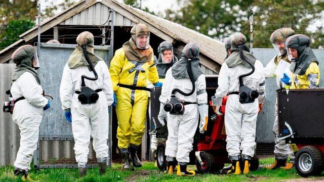 Дания изолирует северные регионы из-за мутировавшего коронавируса