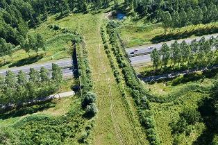 Значимое событие для российский автодорог – первый экодук для животных от к ...