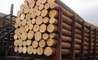 В ЕС отреагировали на протесты украинцев против экспорта леса