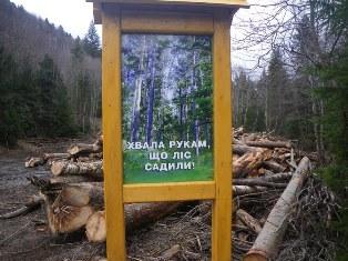Вырубка леса в Карпатах