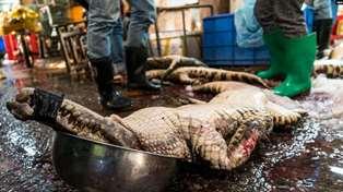 Мокрые рынки Китая: как работает потенциальный источник коронавируса