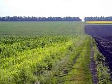 Ющенко разрешит продавать сельхозземли