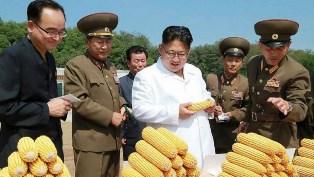 В КНДР может начаться голод на уровне 90-х