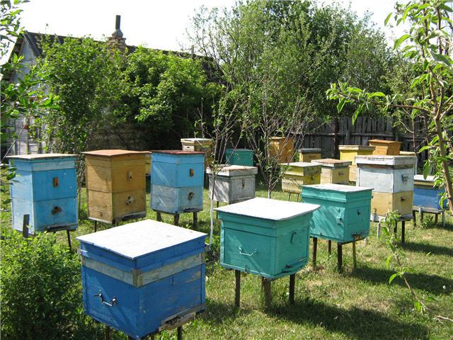 Первые шаги в пчеловодстве: как выбрать улей?