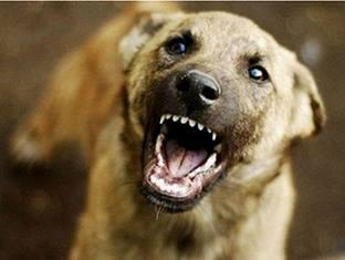 В Днепре на ЖМ Парус неадекватный собачатник терроризирует весь двор
