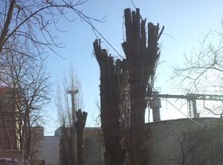 В Днепре незаконно уничтожают деревья на основании липовых документов